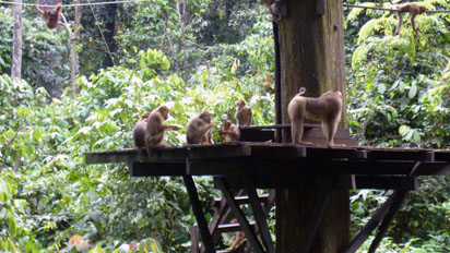 Monkeys hanging about
