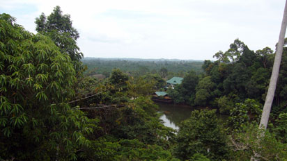 View of the rainforest