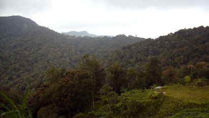 Malaysian forest