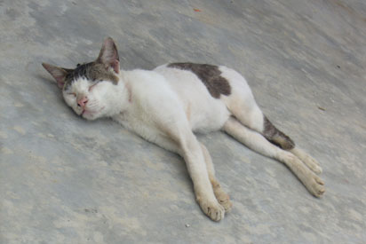 Cat in Kuching