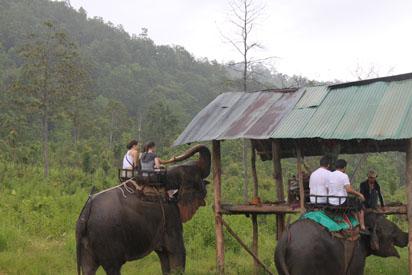 Elephants getting bananas