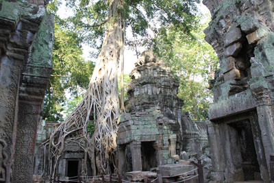A tree growing out of an Angkor Heritage temple